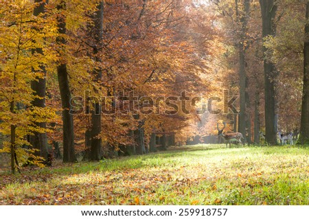 Forest pathway in the autumn with several deer - stock photo
