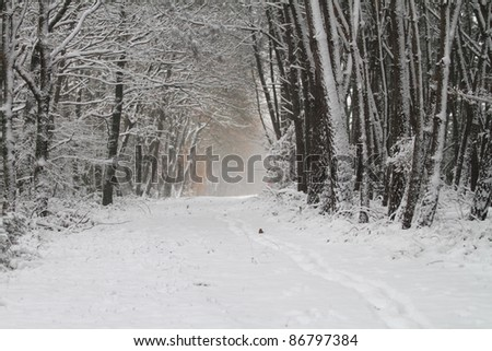 Forest pathway under snow - stock photo