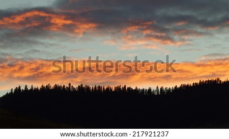 Forest pine trees silhouette against colorful clouds at sunset Flathead Indian Reservation,  Rocky Mountains, western Montana great background with room for text coniferous woodland woods environment - stock photo