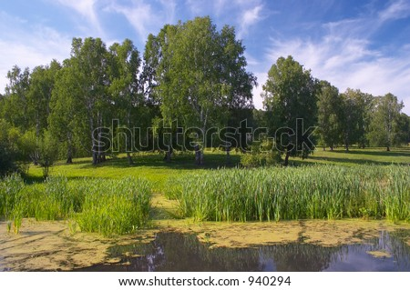 Forest pond - stock photo
