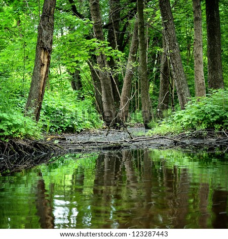 forest river scene - stock photo