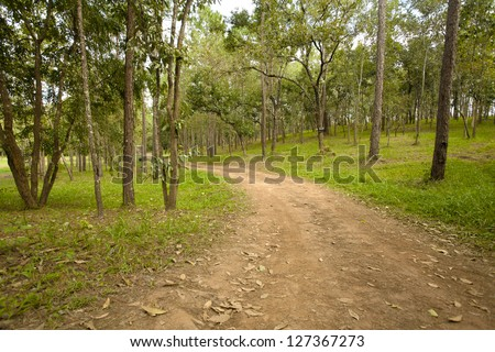 forest road, curve brown rough road to pine forest - stock photo