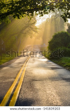 Forest road in early foggy morning with visible sun rays  - stock photo