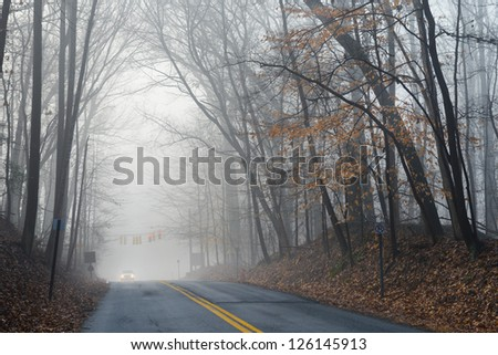 Forest road in fog - stock photo