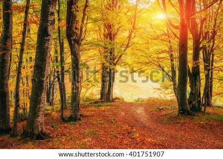 Forest Road in the autumn. Autumn Landscape. Ukraine. Europe - stock photo