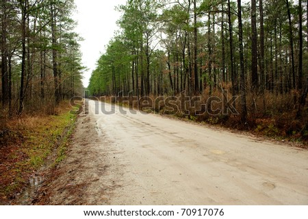 Forest road on a rainy day - stock photo