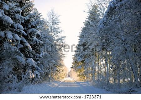 Forest road with a deep layer of snow. Jutland, Denmark, Scandinavia. - stock photo