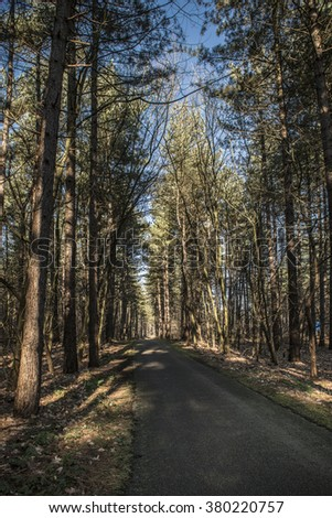 Forest road with shadows - stock photo