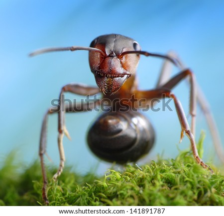 forest robber formica rufa, ant tales - stock photo