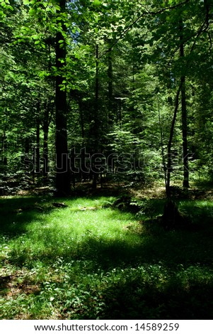 Forest scene during summer day - stock photo