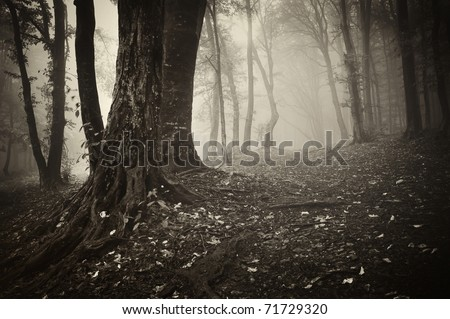 forest scene with an old tree and leafs on the ground - stock photo