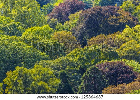 Forest seamless pattern. View from above. - stock photo