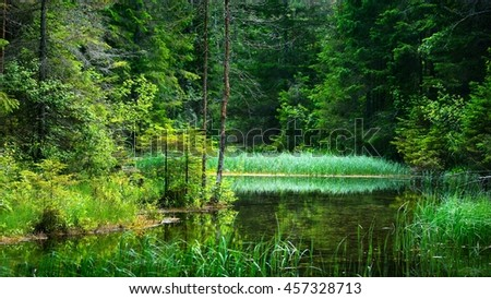 Forest spring at the beginning of the river in Endla nature park, Estonia - stock photo