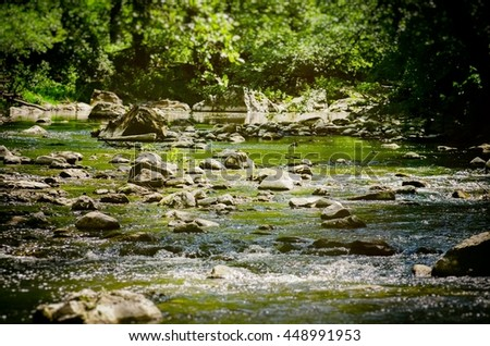 Forest Stone River Over Greenery in Sunny Day - stock photo