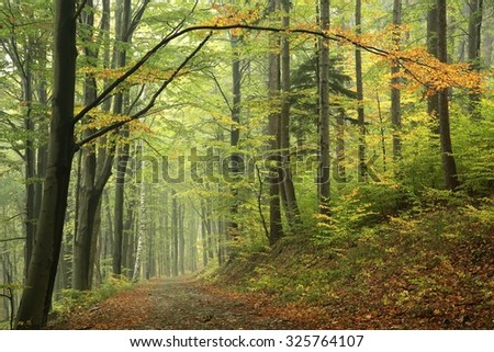 Forest trail in autumnal colors. - stock photo