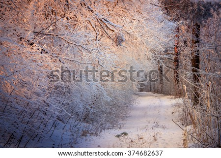 Forest trail. Trees and shrubs are covered with frost. warm morning sunlight. A wonderful winter landscape. Color in nature. - stock photo