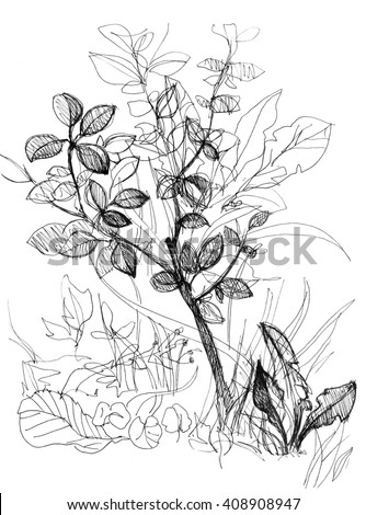 Forest tree, autumn leaves. Detailed forest illustration. Hand drawn amazing botanical artwork. Black and white leaf, tree, bush, branch with leaves. Coloring book page for adult - stock photo