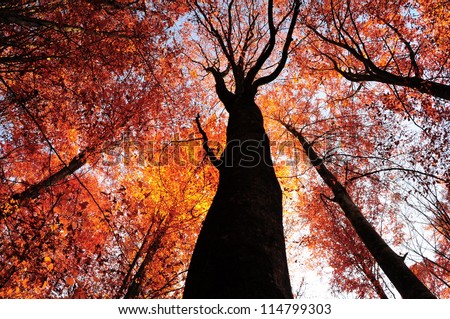 Forest tree. dry leafs backgrounds - stock photo