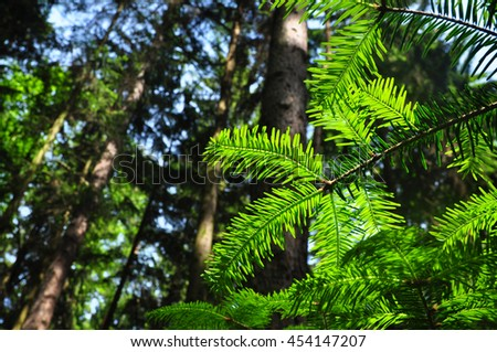 Forest tree environment ecology growth - stock photo