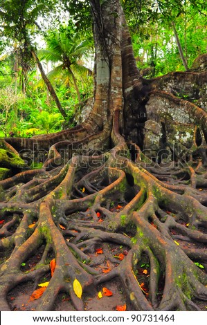 Forest tree with roots and leaves - stock photo