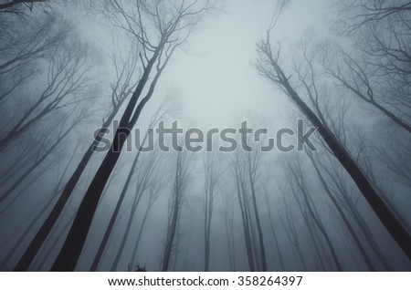 forest trees growing toward the sky - stock photo