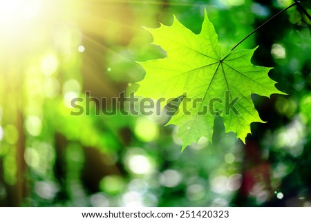 forest trees leaf. nature green wood sunlight backgrounds. - stock photo