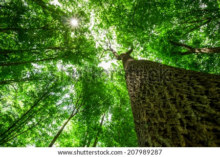forest trees. nature green wood sunlight backgrounds. focus on tree - stock photo