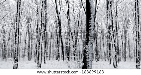 forest trees. nature snow wood backgrounds. panorama  - stock photo