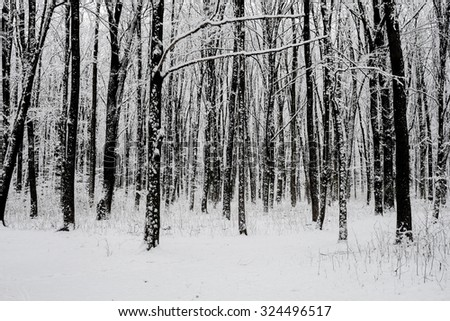 forest trees. nature snow wood backgrounds. winter - stock photo