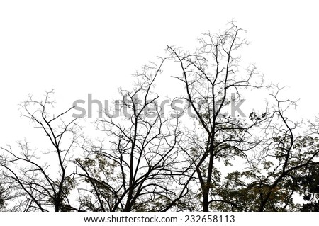 Forest trees on white background. Abstract winter nature. - stock photo