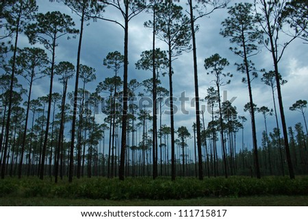 forest twilight - stock photo