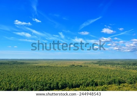 forest with a bird's-eye view - stock photo