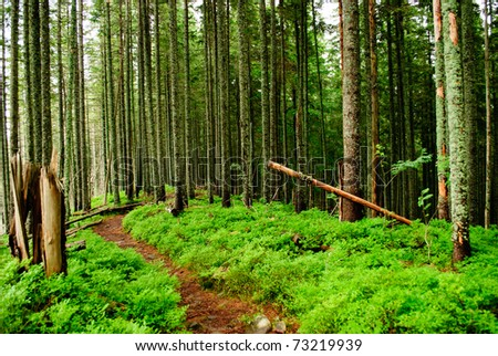 Forest with fallen trees and green plants - stock photo