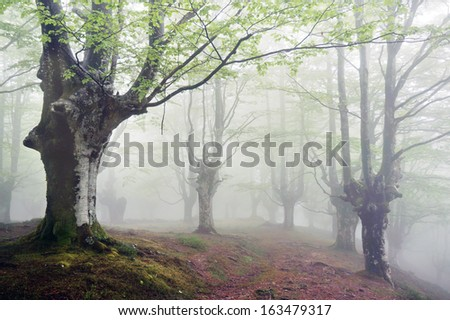 forest with fog and a footpath - stock photo