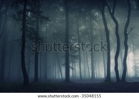 Forest with fog at night - stock photo