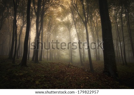 forest with fog in the morning - stock photo