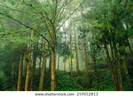 forest with mist in mountain ali in taiwan - stock photo