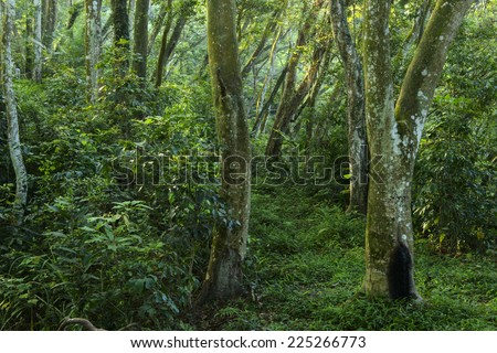 forest with morning sunlight  - stock photo