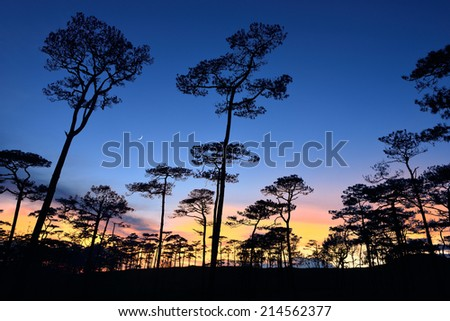 forest with sunset at twilight time - stock photo