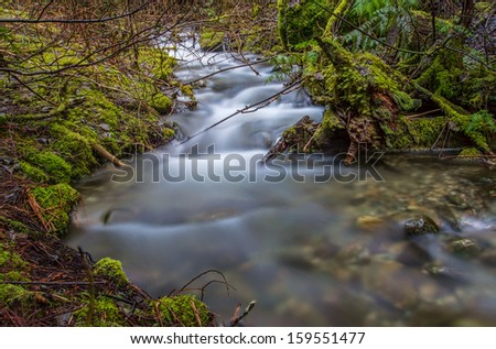 Forest with winding stream flowing through - stock photo