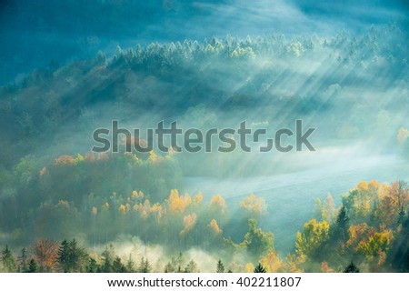 Forested mountain slope in low lying cloud with the evergreen conifers shrouded in mist in a scenic landscape view - stock photo