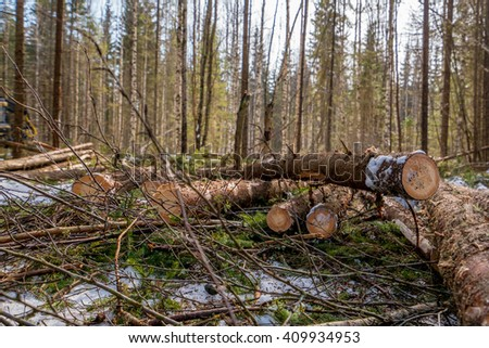 Forestry. Close-up of spruce trunks after felling - stock photo