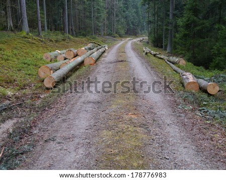 forestry, cut beech trees near a dirt road - stock photo