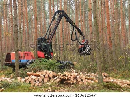 Forestry heavy harvester chopping trees - stock photo