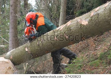 Forestry worker - stock photo