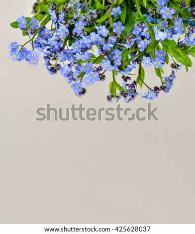 forget-me-flower on a white background. Arrangement of blue forget-me-not flowers. - stock photo