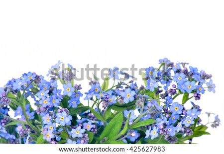 forget-me-flower on a white background. Arrangement of blue forget-me-not flowers isolated on white background - stock photo