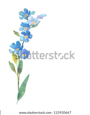 Forget Me Not Flower - stock photo