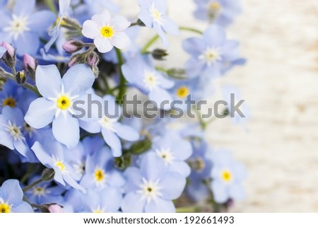 Forget-me-not flowers on wooden background - stock photo