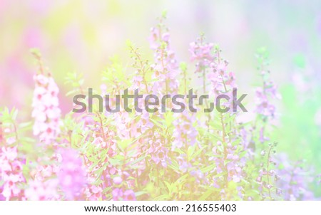 Forget Me Not in soft color and blur style for background wit soft focus - stock photo